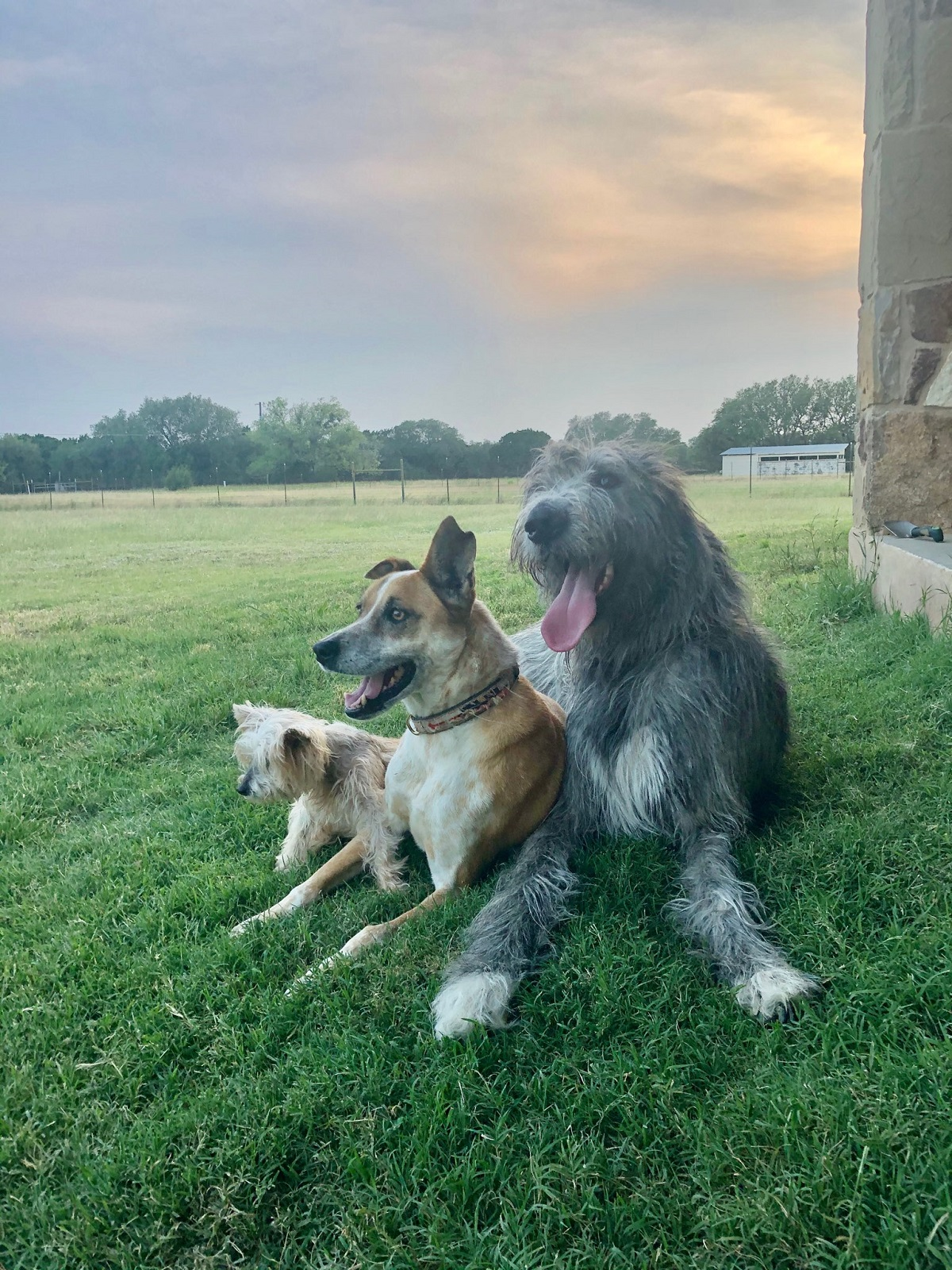 All 3 dogs - Copy.jpg