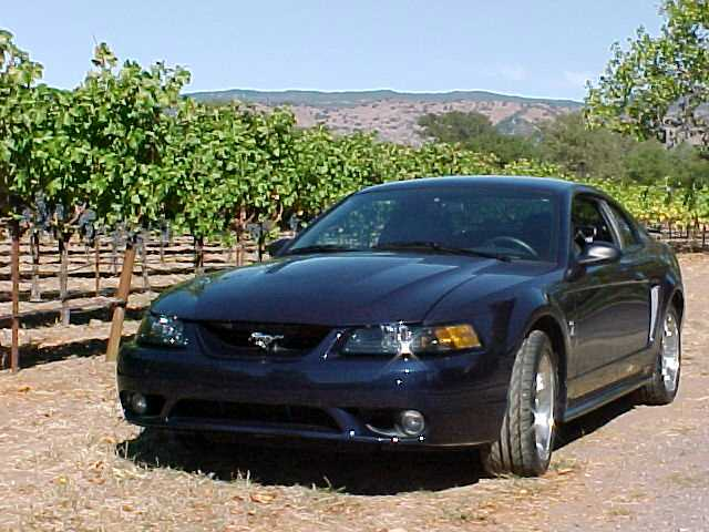 Cobra in the Vineyard.jpg
