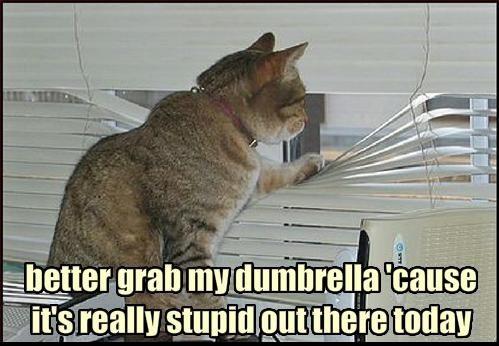 dumbrella_zps7fc64d4c.jpg