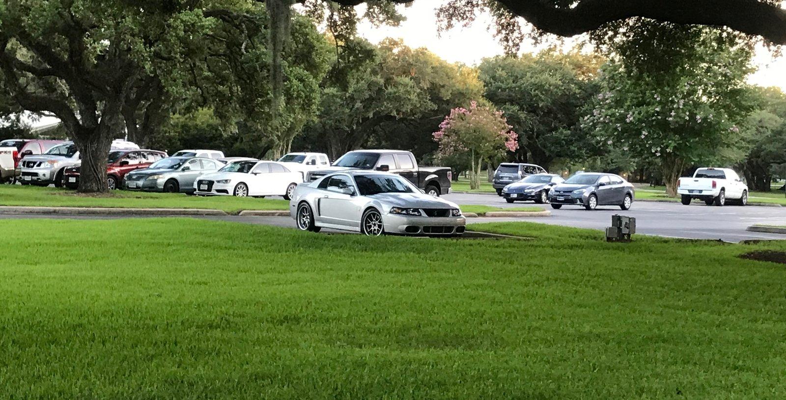 Houston Oaks.jpg