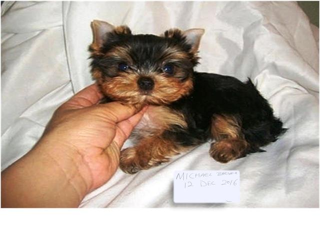 puppy_zpsv5aysrpt.jpg