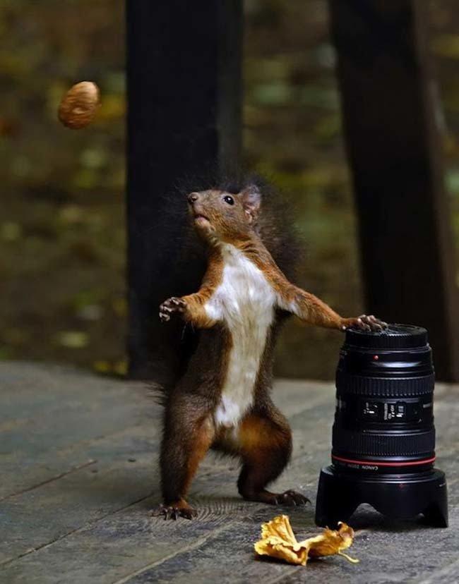 squirrelcamera.jpg