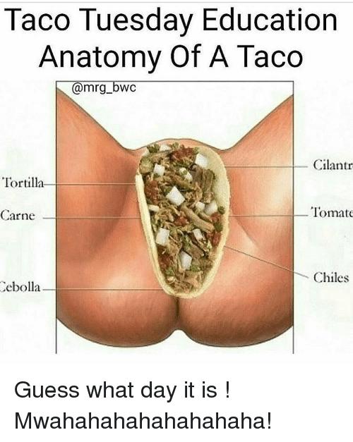 taco-tuesday-education-anatomy-of-a-taco-mrg-bwc-cilantr-12788817.png