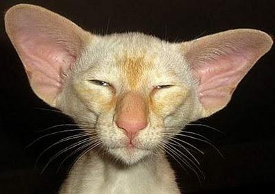 ugly-cat.jpg
